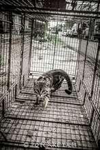cat in the trap!