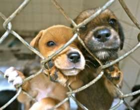 Puppies waiting for adoption
