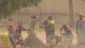 Women using local sticks to thresh the millets