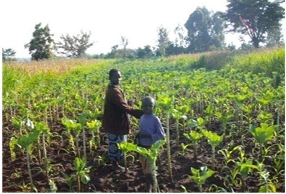 establish kitchen gardens for 500 kenyan orphans ...