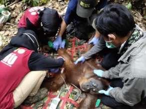 Bangun receiving treatment. Photo by OIC.