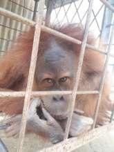 Fatimah, caged