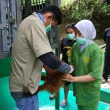 Handing Baby over to SOCP Quarantine centre