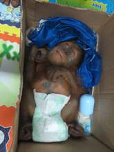 Baby Pepe rescued in August 2014