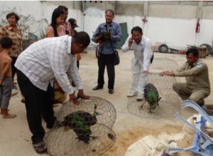 3 peafowl rescued by WRRT in January