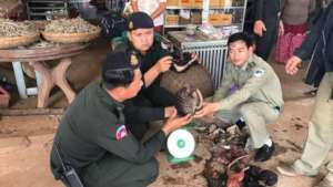 WRRT rescue live pangolin & confiscate bear parts