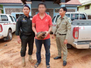 Pangolin rescued from wildlife trader