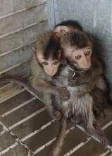 Help Stop Illegal Wildlife Trafficking