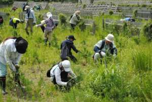 Constant weeding crucial to seedlings` survival
