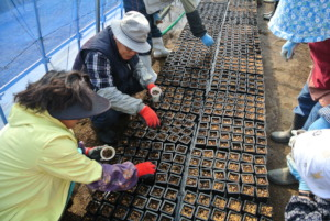 Seed sowing at OISCA nursery