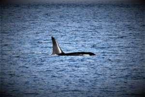 J38 Apr. 7, Useless Bay, Whidbey Isl, Bonnie Gretz