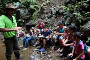 Children learning about the forest