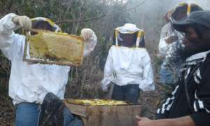 Las Diez Rosas checking on their hives