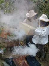 The beekeepers begin their harvest!