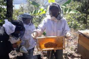Juan holds a frame already 60% full of honey