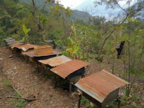 The group's growing apiary