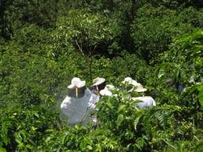 Las Diez Rosas in the apiaries