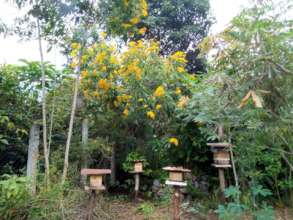 The native stingless bee apiary amid winter blooms