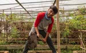 Ali Najibi practices in the farm