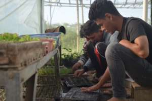 Students are seedling the seeds