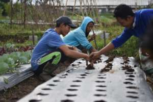 Planting activity in the farm