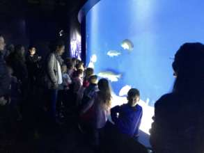 A kindergarten group visits the Aquarium