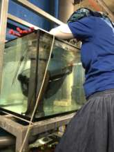 Transferring an eel from quarantine to exhibit