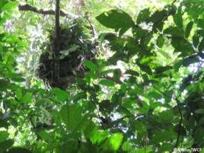 Anti-poaching team discovering a chimpanzee nest