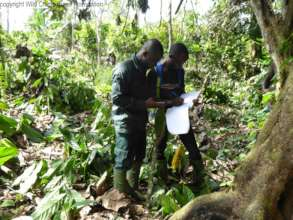 Eco-guards collecting data in Cavally Forest