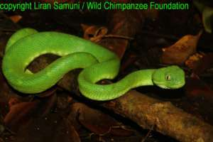 copyright Liran Samuni / WCF, snake in the forest
