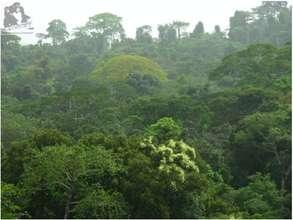 Tai-Sapo forest