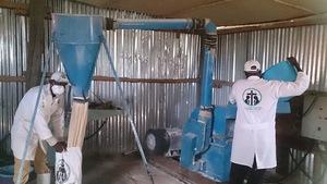 Procesing Maize Flour offering Children Nutrition
