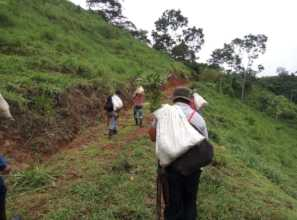 Transporting the trees to planting sites is work