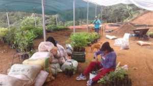 New Tree Nursery 3 provides employment for women
