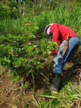 Paid Labor Insures GROWTH of  young trees
