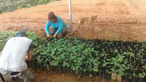 Producing baby trees is a year round job