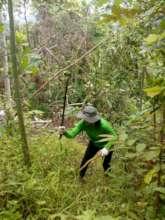 Growing big trees requires work