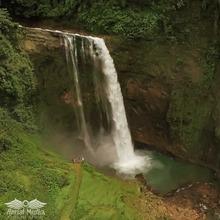 Eco Tourism shares the rainforest trees!