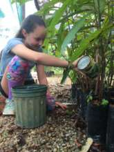 Adding fertile soil to tree bags for growth!