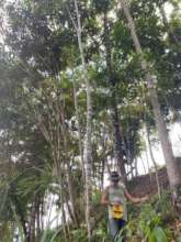 Jose measures 12 year old trees for CO2 capture