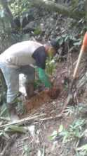 Every tree is planted with follow up care