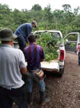 Tree Delivery is part of the work