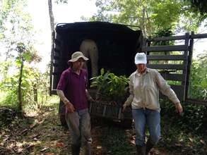 Transporting Diverse Trees to Planting Sites