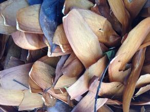 caoba seeds