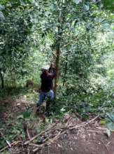 Fair pay jobs for workers stops deforestation