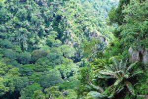 Critically Endangered Cycads live in Mpanga Gorge