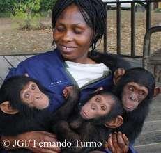 Three of Tchimpounga's newest residents