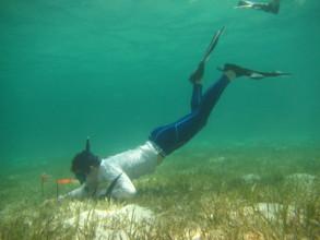 Volunteers also study sea turtle habitat for clues