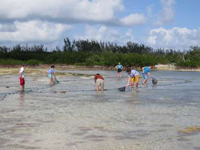 Students survey mangrove creeks in the Bahamas.