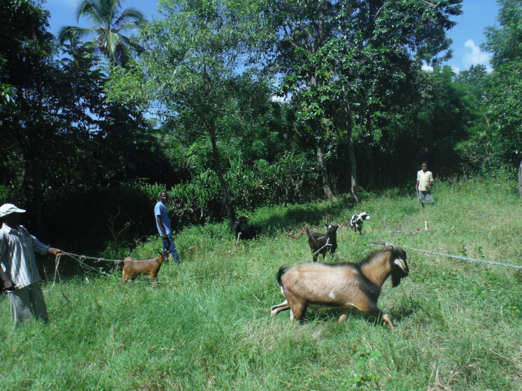 Goats: Help Families Become Self-Sufficient